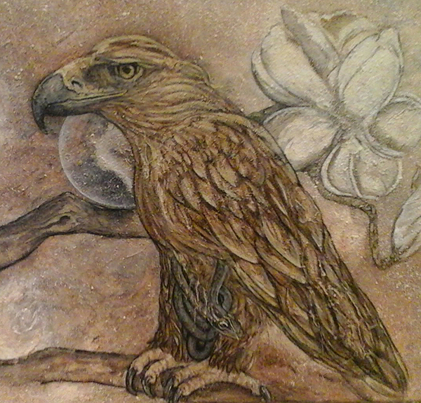 Golden booted eagle & magnolia tree